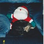 Lucky's favorite pillow